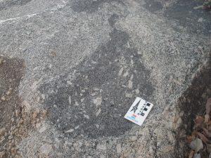 Enclave máfico inserido no granito porfirítico contendo fenocristais de K-feldspato capturados.